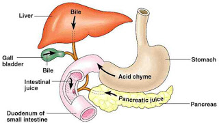 Remedies for Acid reflux, Gerd and Bile Reflux Treatment