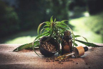cbd-cannabidio-cbd-oil-hemp-oil-marijuana